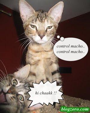 014 Info Kucing