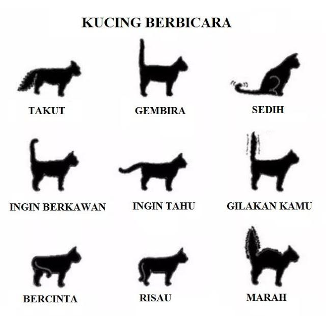 Maksud Di Sebalik Pergerakan Ekor Kucing Info Kucing