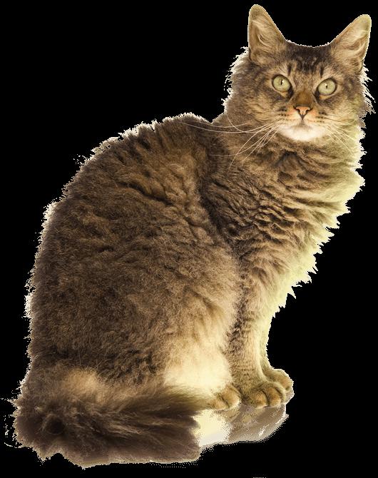 La Perm Info Kucing