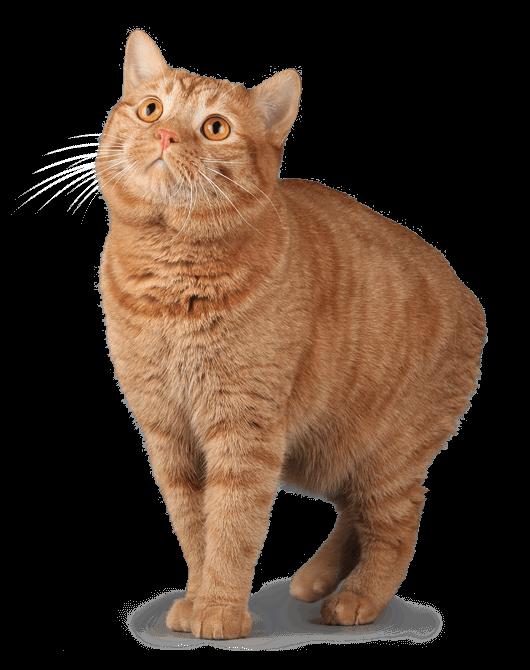 Tanda Anak Kucing Sembelit Menjaga Anak Kucing Bulan Info