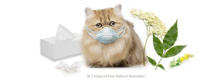 Cara Merawat Selsema Kucing